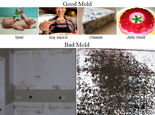 good mold bad mold in walls